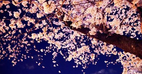 大阪のお花見スポットで夜桜がきれいな場所