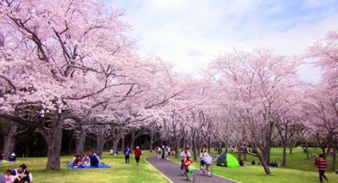 大阪で桜が人気のお花見スポット