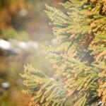 花粉症が引き起こすアナフィラキシーの症状
