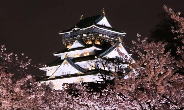 大阪城公園西の丸庭園 夜桜