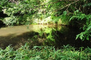 ザリガニが居そうなため池