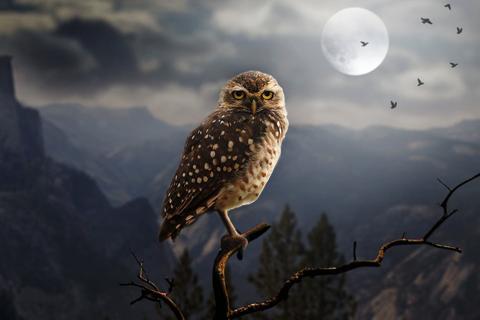 フクロウの画像