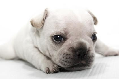 EOS Kiss X7っぽい犬